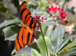 Butterfly Farm - Attractions Perth