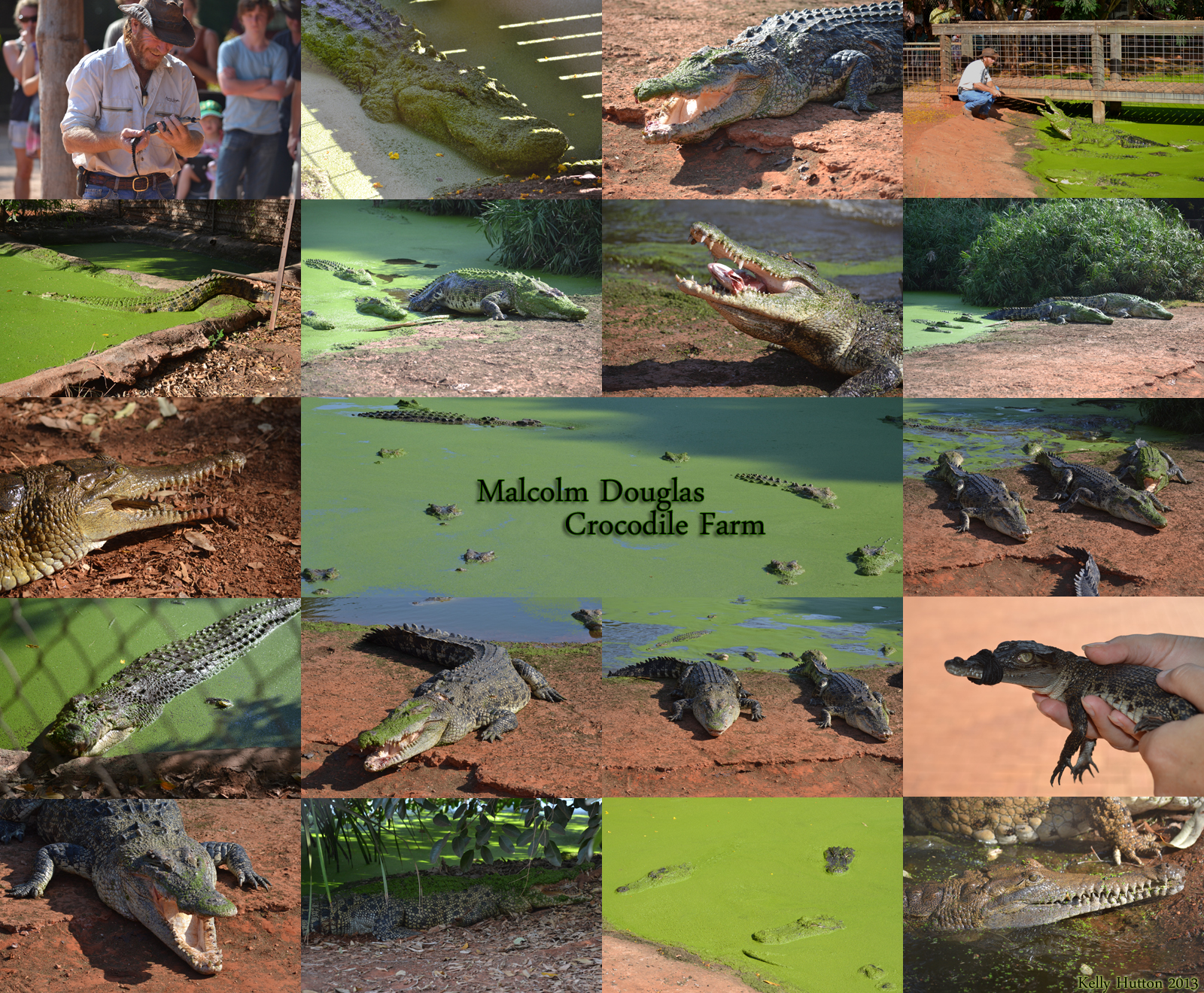The Malcolm Douglas Crocodile Park - Attractions Perth