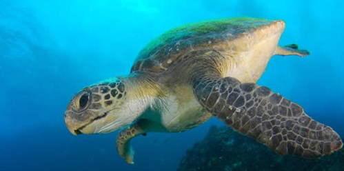 Byron Bay Dive Centre - Attractions Perth