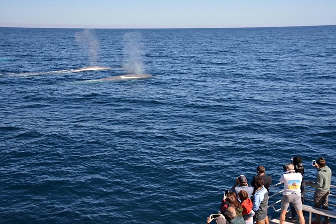 Blue Whale Perth Canyon Expedition - Attractions Perth
