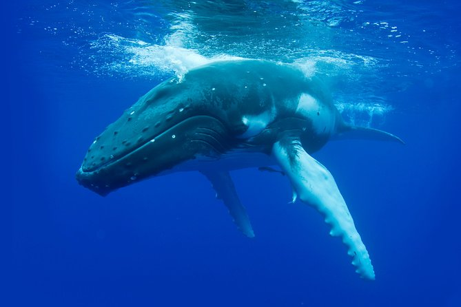 Whale-Watching Cruise from Dunsborough - Attractions Perth