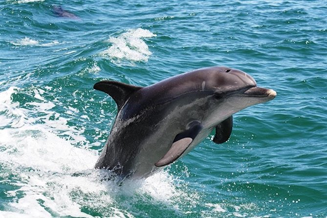 Half-Day Mandurah Canals  Dolphin Watch Tour - Attractions Perth