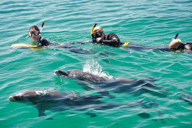 Swim with Dolphins Day Trip from Perth - Attractions Perth