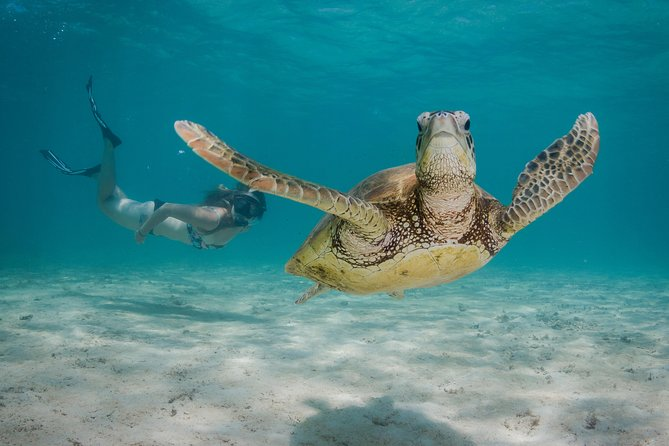 Marine Life Discovery  Lagoon Snorkeling Tour from Exmouth - Attractions Perth