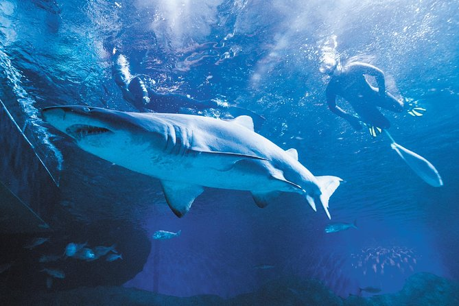 AQWA 2-Hour Snorkel with Sharks Experience - Attractions Perth
