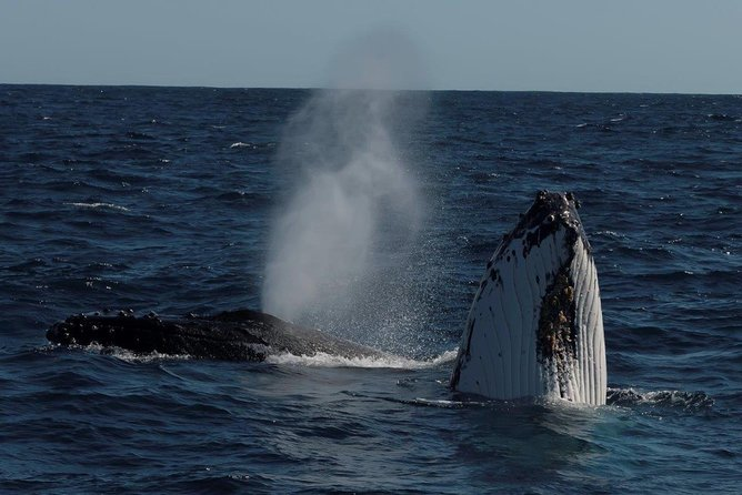 Perth Whale-Watching Cruise from Hillarys Boat Harbour - Attractions Perth