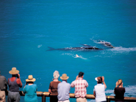 Whale Watching At Head Of Bight - Attractions Perth