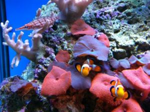 Tropical Marine Centre - Attractions Perth
