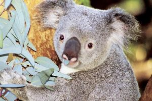 Perth Zoo General Entry Ticket and Sightseeing Cruise - Attractions Perth
