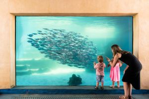 AQWA the Aquarium of Western Australia - Attractions Perth