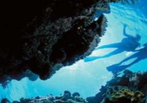 Deep Sea Divers Den - Attractions Perth